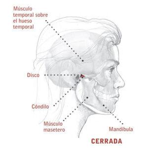 Anatomía del bruxismo: mandíbula cerrada